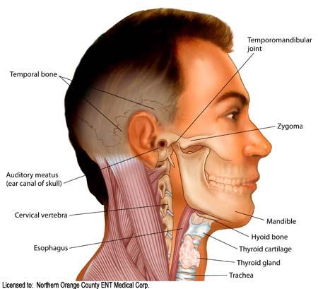 obat benjolan di leher akibat kelenjar atau tumor share